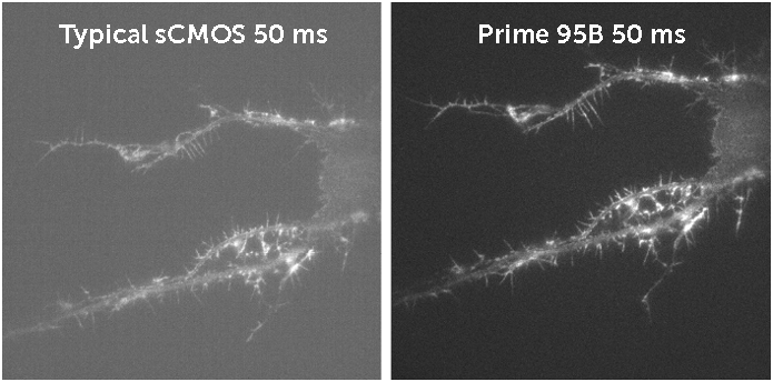 Typical sCMOS 50ms vs Prime 95B 50ms comparison